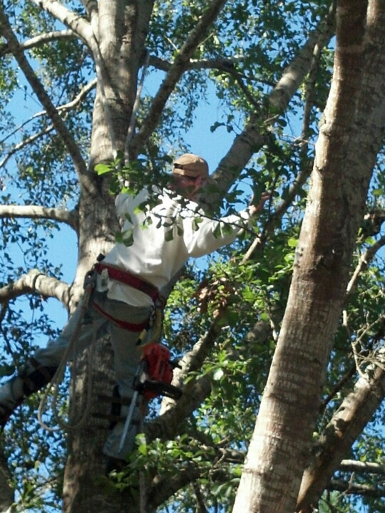 tree removal climber in Mobile AL