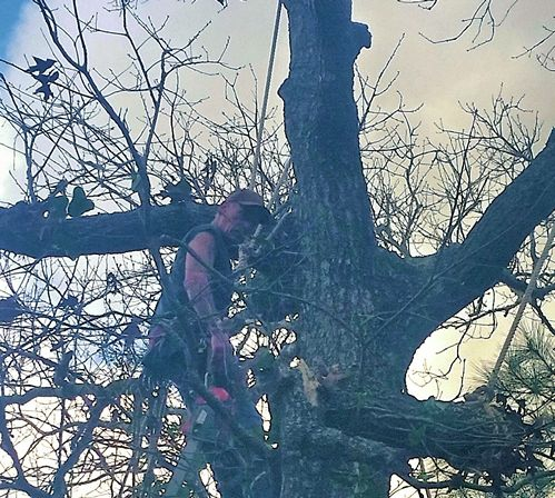 tree removal Robertsdale AL