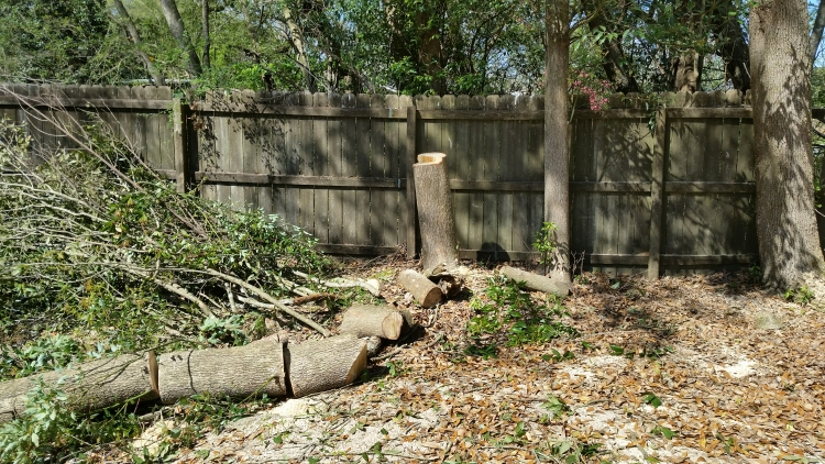 tree service point clear al